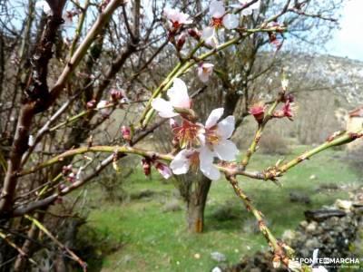 Cañón Caracena; Encina  Valderromán; almendros en flor peña de francia sierra de albarracin